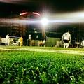 Sân bóng Phúc Anh