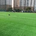 Sân bóng Thành Phát