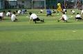 Sân bóng đá CLB bóng đá Phú Mỹ